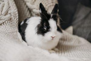 Brosse pour lapin cricraccroc